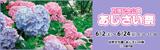 万博記念公園あじさい祭|2018年6月2日(土曜日)から6月24日(日曜日)まで ※水曜休園|時間:9時30分から17時まで|場所:自然文化園 あじさいの森