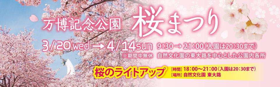 万博記念公園 桜まつり|2019年3月20日(水曜日)から4月14日(日曜日)※期間中無料 9時30分から21時まで(入園は20時30分まで)|場所:自然文化園の東大路を中心とした公園内各所|「桜のライトアップ」時間:18時から21時まで(入園は20時30分まで)場所:自然文化園の東大路