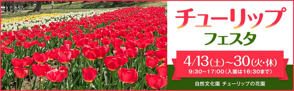 万博記念公園 チューリップフェスタ|2019年4月13日(土曜日)から4月30日(火曜日・休日)9時30分から17時まで(入園は16時30分まで)|場所:自然文化園 チューリップの花園