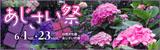 万博記念公園 あじさい祭|日時:6月1日(土曜日)~6月23日(日曜日)|場所:自然文化園 あじさいの森