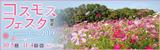 コスモスフェスタ2019|開催日時:2019年10月5日(土曜日)から11月4日(月曜日・休日)|開催場所:花の丘