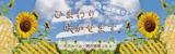 花アルバム・開花情報|ひまわり 今年は花壇で咲かせます!