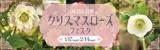 万博記念公園クリスマスローズフェスタ|2021年1月17日(日曜日)から2月14日(日曜日)まで|西日本最大級のクリスマスローズイベント