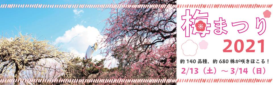 万博記念公園 梅まつり2021 2021年2月13日(土曜日)から3月14日(日曜日)まで 約140品種、約680株が咲きほこる!