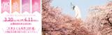 万博記念公園 桜まつり 2021年3月20日(土曜日・祝日)から4月11日(日曜日)まで 園内各所 焼く5,500本! 「日本さくら名所100選」万博記念公園の桜をお楽しみください