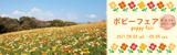 万博記念公園 ポピーフェア|2021年4月3日(土曜日)から5月5日(日曜日)まで|約38万本のポピー畑
