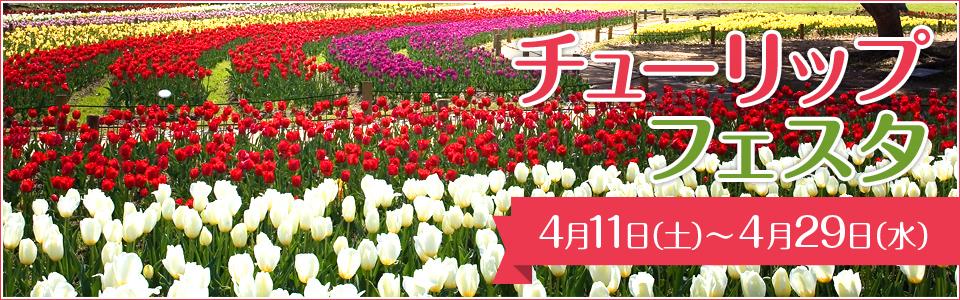 万博記念公園チューリップフェスタ 4月11日(土曜日)から4月29日(水曜日)まで