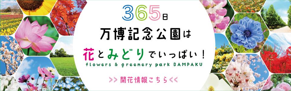 365日 万博記念公園は花とみどりでいっぱい! flowers & greenery park BAMPAKU