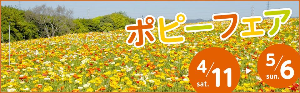 万博記念公園ポピーフェア 4月11日(土曜日)から5月6日(日曜日)まで