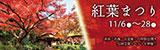 紅葉まつり 2021年11月6日(土曜日)〜2021年11月28日(日曜日) 茶室「汎庵・万里庵」の特別公開や伝統芸能イベントも開催!