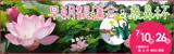 万博記念公園 早朝観蓮会&象鼻杯 7月10日(金曜日)から12日(日曜日)、7月17日(金曜日)から20日(月曜日・祝日)、7月24日(金曜日)から26日(日曜日