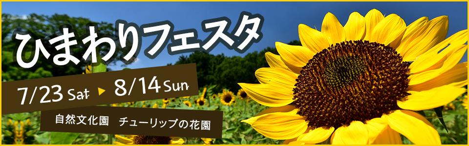 万博記念公園ひまわりフェスタ 平成28年7月23日(土曜日)から8月14日(日曜日)まで