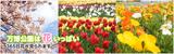 万博公園は花いっぱい 365日花が見られます