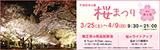 万博記念公園桜まつり|平成29年3月25日(土曜日)から4月9日(日曜日)9時30分から21時 (入園は20時30分まで)|場所:自然文化園 東大路|菊正宗の商品試飲会・桜のライトアップ