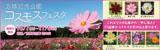 万博記念公園コスモスフェスタ|平成29年10月7日(土曜日)から11月5日(日曜日)まで※期間中無休|自然文化園 花の丘