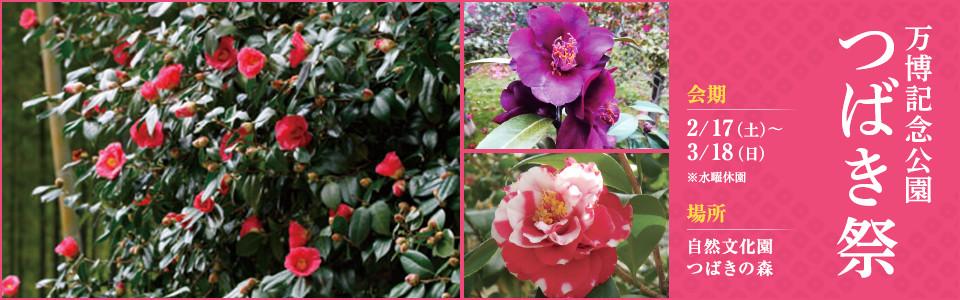 万博記念公園つばき祭|平成30年2月17日(土曜日)から3月18日(日曜日) ※水曜休園|場所:自然文化園 つばきの森