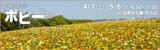 万博記念公園ポピーフェア|2018年4月7日(土曜日)から5月6日(日曜日)まで|時間:9時30分から17時まで|場所:自然文化園 花の丘