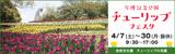 万博記念公園チューリップフェスタ|2018年4月7日(土曜日)から4月30日(月曜日・振替休日)まで|時間:9時30分から17時まで|場所:自然文化園 チューリップの花園