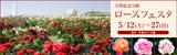 万博記念公園ローズフェスタ|2018年5月12日(土曜日)から5月27日(日曜日)まで|場所:平和のバラ園