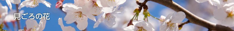 万博記念公園の見ごろの花