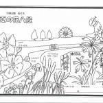 夏の花八景塗り絵原画3006