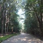 万博の森再生への取り組み