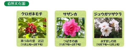 万博記念公園 日本庭園 12月の見ごろの花