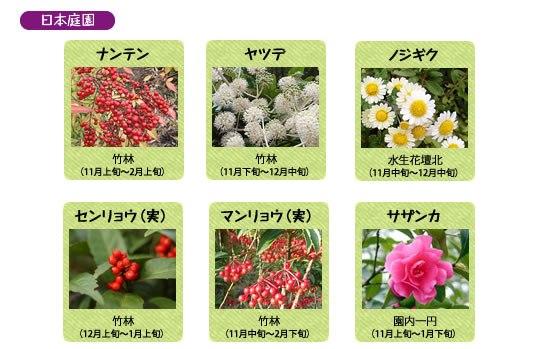 万博記念公園 自然文化園 12月の見ごろの花
