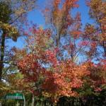 紅葉の観察会