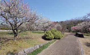 茶花・梅林の小路