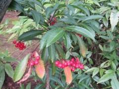季節の植物観察ガイド⑧