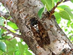 写真で見る昆虫たち
