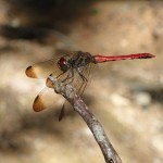 昆虫の観察会