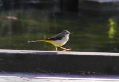 野鳥観察会-夏の鳥をみよう-