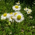 季節の植物ガイド