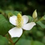写真で見る植物