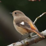 自然環境セミナー「①野鳥の生態と観察技術 ②野鳥の生息環境」