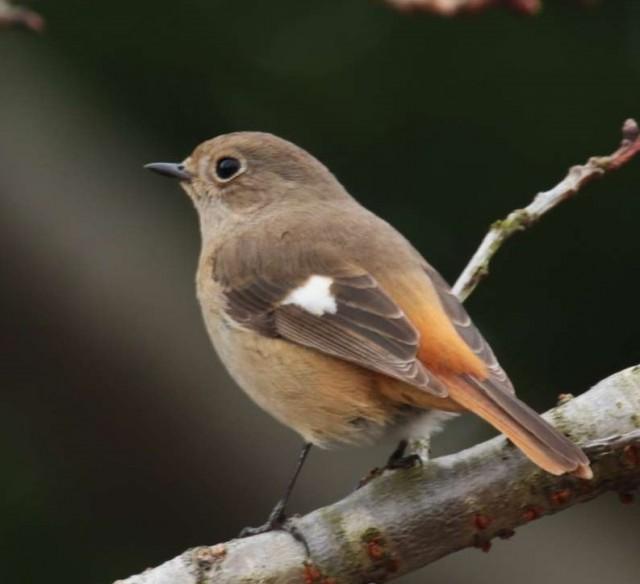 冬の鳥を観察してみよう!