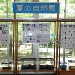 夏の自然展