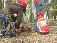 子どものための竹林保全体験