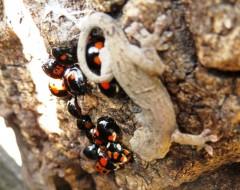 越冬昆虫の観察会