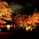 夜間特別公開 日本庭園ライトアップ〜MOMIJI Night Forest〜