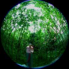 日射計を設置したギャップ形成後4年目のアカメガシワ林