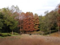 ビオトープの池紅葉2