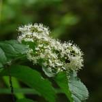 季節の植物観察