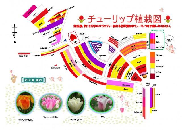 チューリップ植栽図