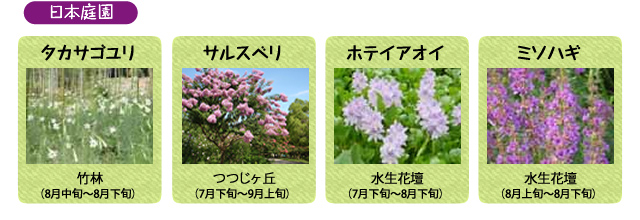 万博記念公園 日本庭園 8月の見ごろの花