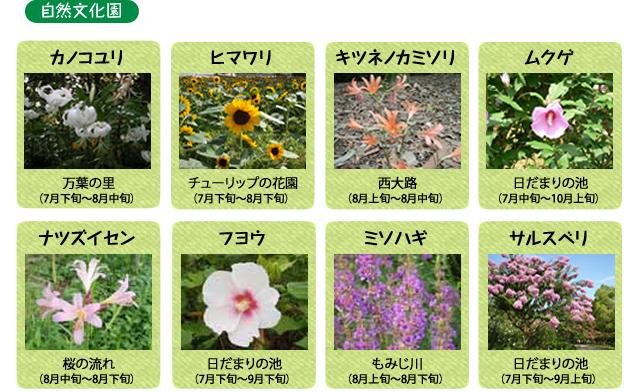 万博記念公園 自然文化園 8月の見ごろの花
