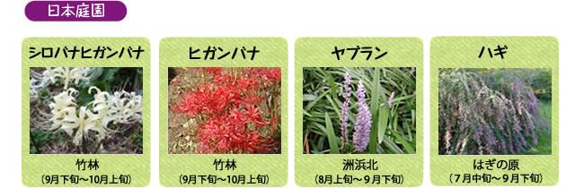 万博記念公園 日本庭園 9月の見ごろの花