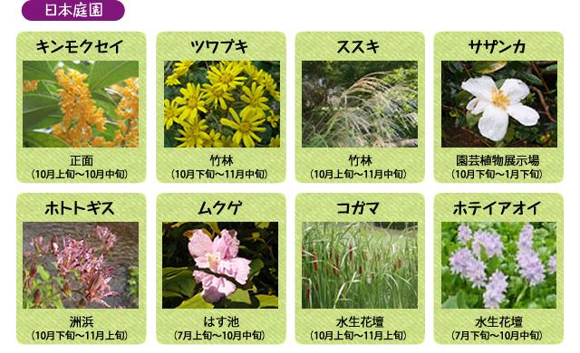 万博記念公園 日本庭園 10月の見ごろの花